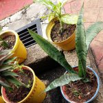 Should you have a real garden or replace it with concrete tiles? thumbnail