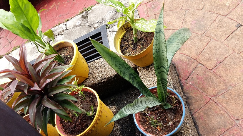 Should you have a real garden or replace it with concrete tiles?