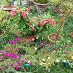 How to Clear a Messy Garden thumbnail