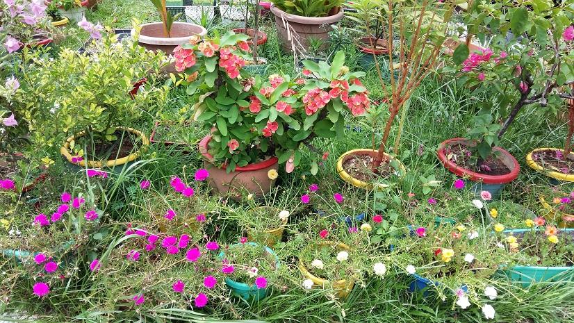 Messy Garden