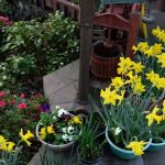 Should you plant your flowers on pots or in the ground?