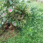 Overgrown and messy garden attracts bad energies/ entities